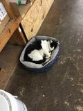 Tilley enjoying a snooze